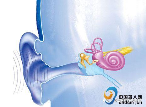 听力神经结构图